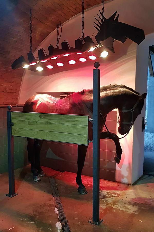 solárium pro koně